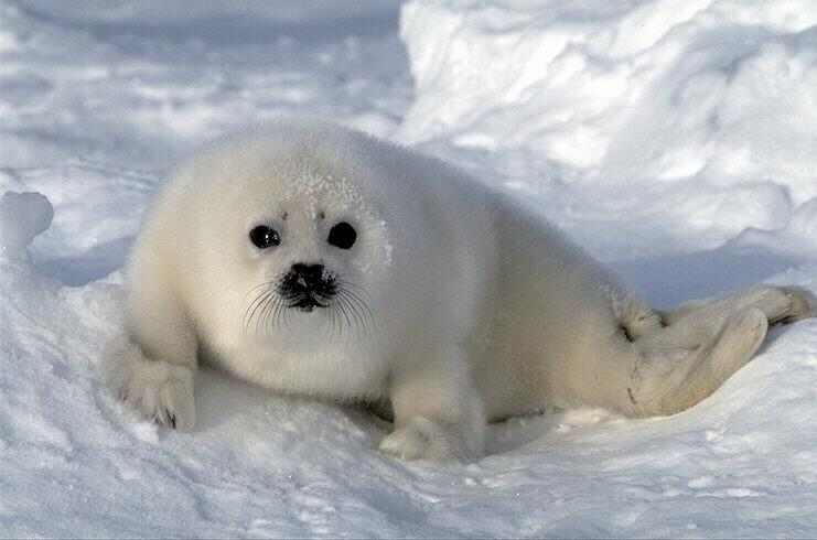 Beauty shots of seals