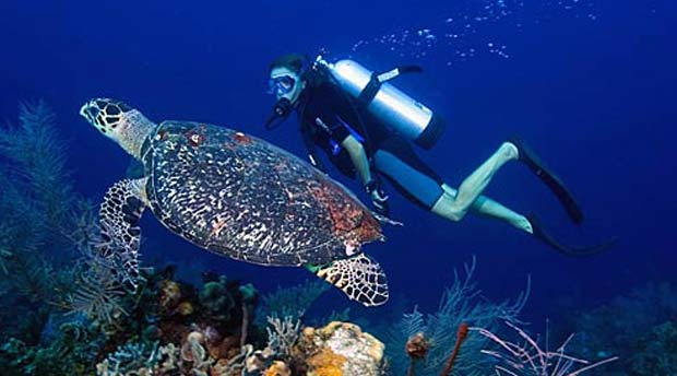 Belize-Barrier-Reef-Diving-with-turtle