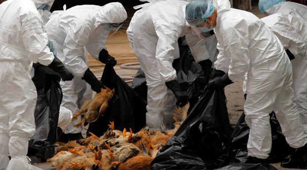 World Bank: Avian Flu in Vietnam